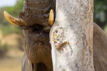 Elefante Che Gioca A Nasconder...