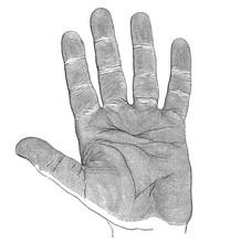 Anatomy - Human Hand