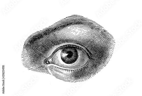 Valokuva  Anatomy - human eye detail, isolated on white