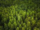 Fototapeta Fototapety na ścianę - Aerial view of the forest