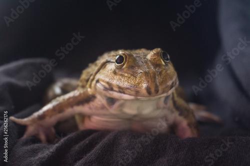 Tuinposter Kikker Big frog on black background on a night