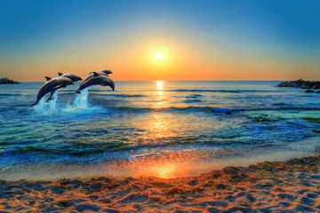 Fototapeta Delfin Dolphins jumping in the blue sea of Thailand at sunset