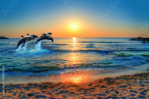 Obraz na plátne Dolphins jumping in the blue sea of Thailand at sunset