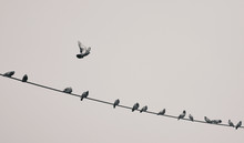 A Bird Flying Away From Wire On Which Other Birds Were Sitting