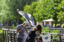 Seagull Flying Away With White Bread In Its Mouth