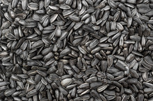 Sunflower Seeds As Food Background. Top View.