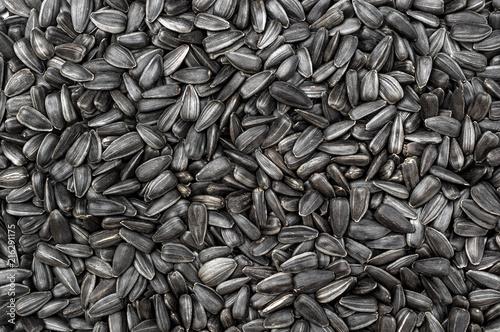 Fototapeta Sunflower seeds as food background. Top view. obraz