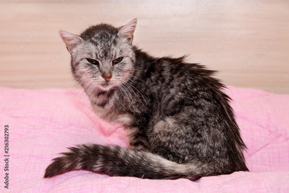 Very old an sick grey tabby cat, saved from the streets, sitting on a pink blanket, looking sad and miserable