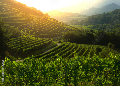 Spoed Foto op Canvas Wijngaard Vineyard at sunset., landscape view of farm in Zarautz.
