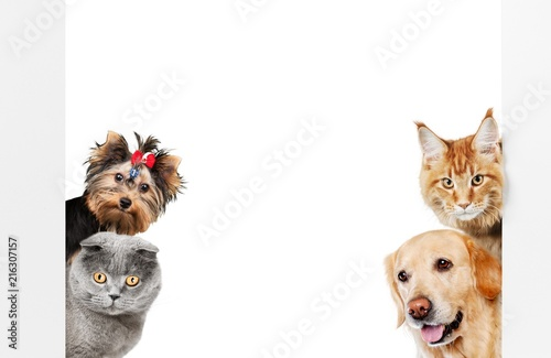 Various cats and dogs as frame