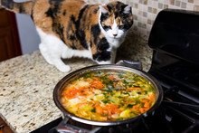 One Curious Calico Cat Sniffing Smelling Homemade Vegetable Soup, Standing On Counter Top In Kitchen, Hot Steam Funny
