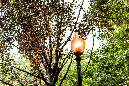 Photo  Illuminated golden lantern in evening in Washington DC with reflection of light