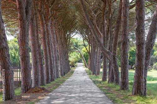 Spoed Foto op Canvas Weg in bos Viale alberato