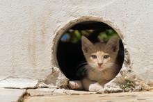 Stray Kitten In Greece