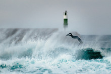 Surfer Jumping Over A Wave Dur...