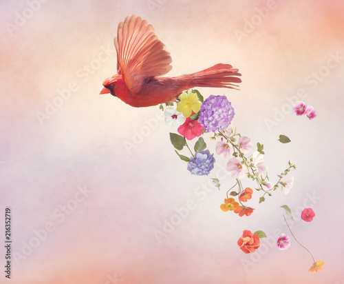 Photo  Northern Cardinal Flying with flowers