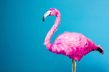Trend Ceramic Pink Flamingo On The Blue Wall Background Like Graphic Resource