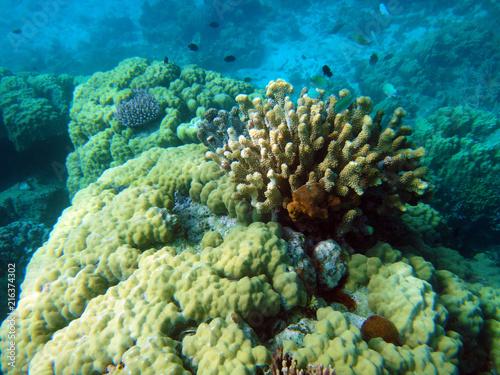 Foto op Aluminium Oceanië Sealife of Tranquility Island, Efate, Vanuatu