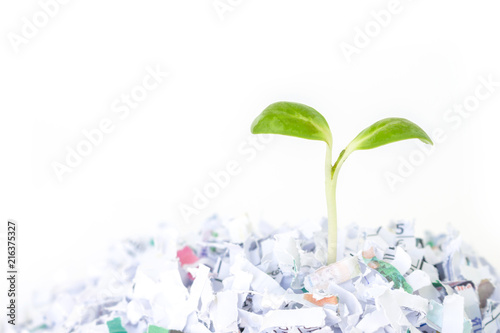 Valokuva  seed sprout growth recycle protect environment nature on white background