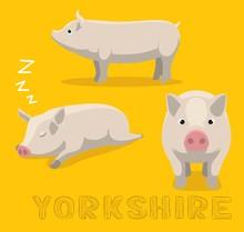 Pig Yorkshire Cartoon Vector I...