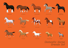 Domestic Horse Breeds Set Cart...