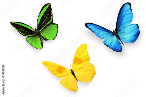 Fotografie, Obraz  set of multicolored butterflies isolated on white background