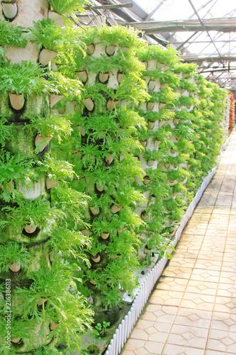 Fotografía  stereo planting vegetables in a modern farm