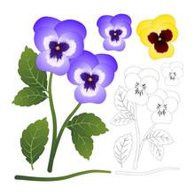 Violet And Yellow Viola Garden...