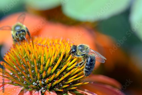 Plakat Honigbiene 2
