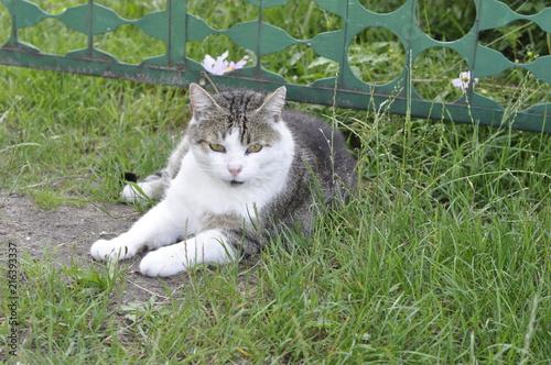 kot, zwierzę domowe #216393337