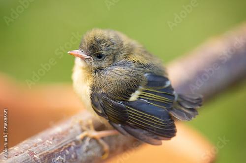 Zdjęcie XXL Zadumany dziecko ptak na gałąź