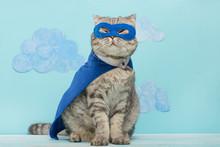 Scottish Cat Superhero In A Mask And Raincoat