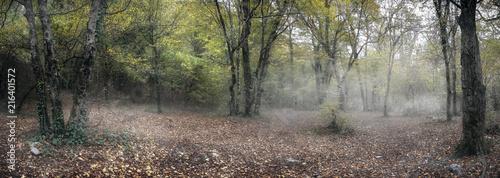 Fotografie, Obraz  Туман в лесу