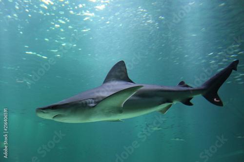 Aquarium de Boulogne sur Mer