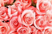Beautiful Roses As Background
