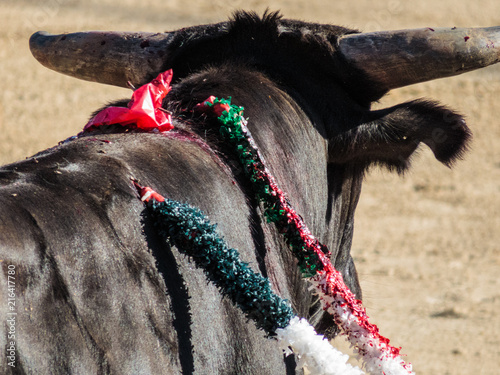 Bullfight - Bull with Banderillas and small trickle of blood
