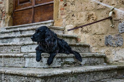 фотографія  cane nero seduto sulle scale
