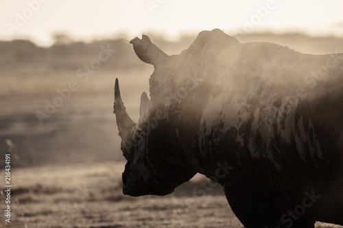 Poster Rhino Facing Extinction