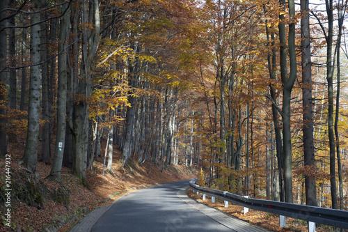 Fotobehang Weg in bos Jesień w Beskidach