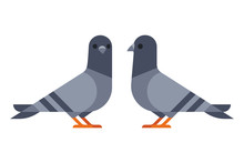 Two Pigeons Simple Illustration