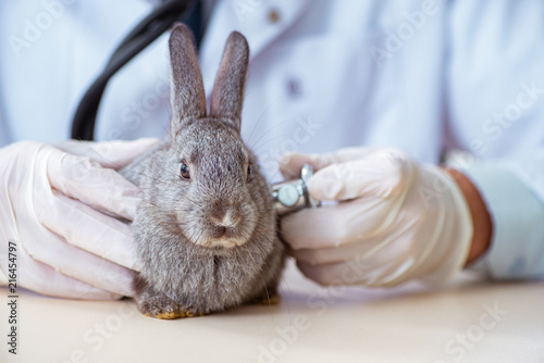 Fotografia Vet doctor checking up rabbit in his clinic