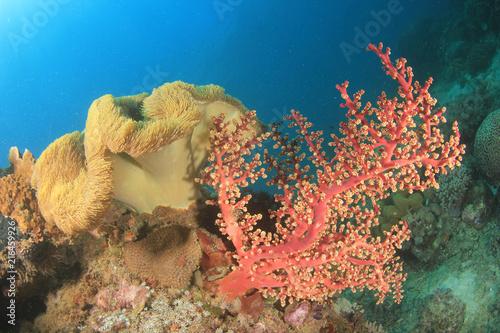 Poster Onder water Coral reef underwater
