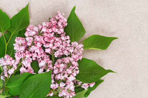 Fotobehang Lilac Lilac branch on cloth surface. Floral background with copy space.