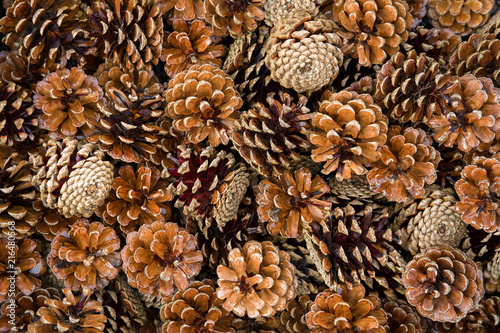 Obraz pile of pine cones - fototapety do salonu
