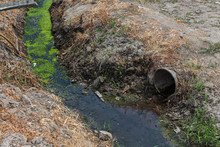 Dirty Sewage Along With Sewage In An Open Ditch Along The Street. Dirty Drainage, An Open Sewer Collector Here With Toxic Algae. Ecological Problem. Dirty Sewage With Duckweed And Algae. Sewage Pipe