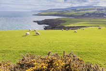 Spring Panorama Of Isle Of Man