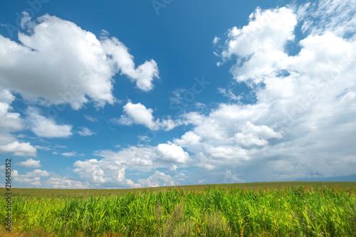 Foto op Aluminium Platteland Beautiful morning sunrise over the corn field