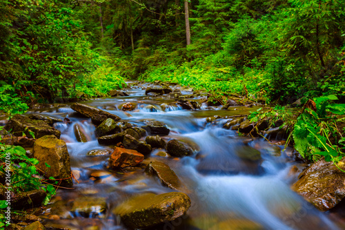 Fototapeten Wald small creek rushing through the wet mountain forest