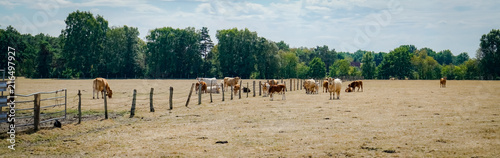 Valokuva Klimawandel - Dürre, vertrocknete Rinderweiden