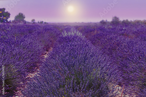 Foto op Aluminium Aubergine Lavender field. Harvesting. Beautiful sky. Against the backdrop of mountains and clouds. French Provence. Surroundings of Valansol. Map. Toned.